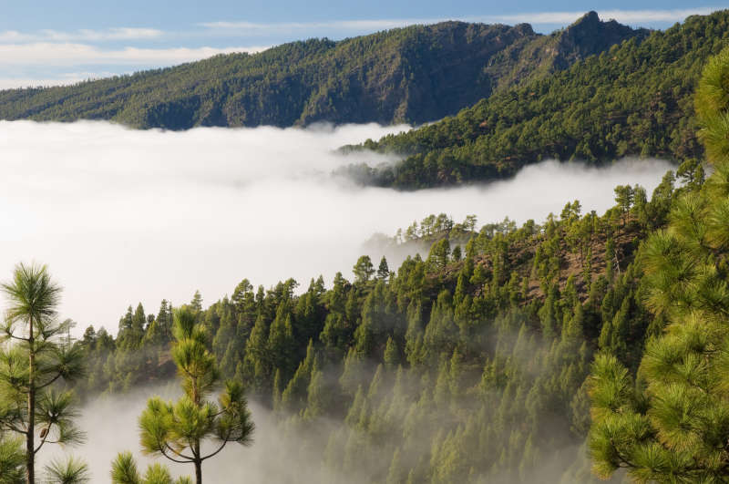 imagez-nature-foret-avec-des-nuages-montagne